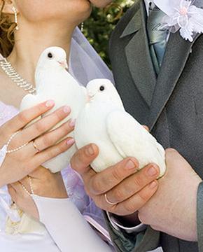 Hochzeitstauben Tauben Hochzeit